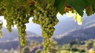 Виноделие на Кипре: история и особенности производства